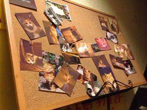 赤茄子の入口を飾る猫の写真