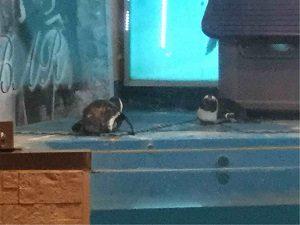ペンギンのいるBARのペンギン2