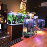 熱帯魚BAR「近藤熱帯魚店」@大阪中崎町|アクアリウムとカクテルと