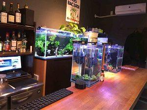 近藤熱帯魚店のカウンターからも熱帯魚の水槽が見える