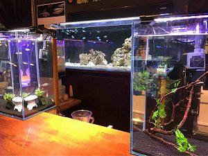 近藤熱帯魚店のカウンター越しに見える熱帯魚たち