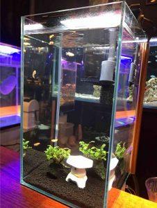 近藤熱帯魚店の店内の水槽には色々な熱帯魚がいる