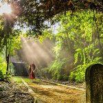 沙羅双樹の意味は仏教の三大聖樹にあり?|坊主バーで教えてもらった事 その2