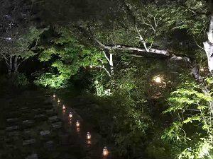 ぼうずン・コーヒーの庭は夜になると幻想的