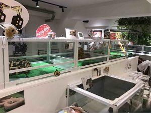 東京スネークセンターでは至る所にヘビさんがいる