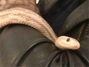 東京スネークセンターで触れ合うヘビ