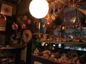 海底BARシェルハウスには貝殻もいっぱい