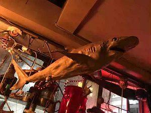 海底BARシェルハウスの天井からはサメの剥製