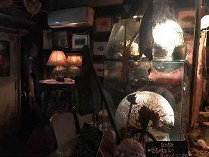 海底BARシェルハウスの店内中央には見事なサンゴがある